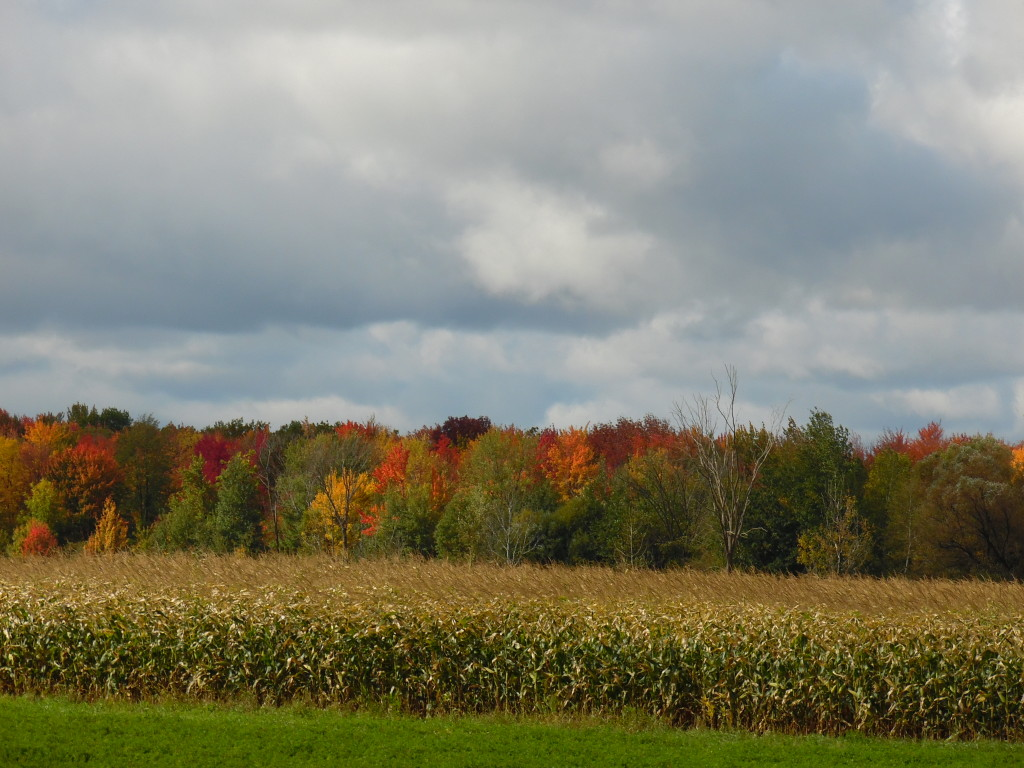 The leaves are just starting to turn....autumn in the Midwest is so scenic!!