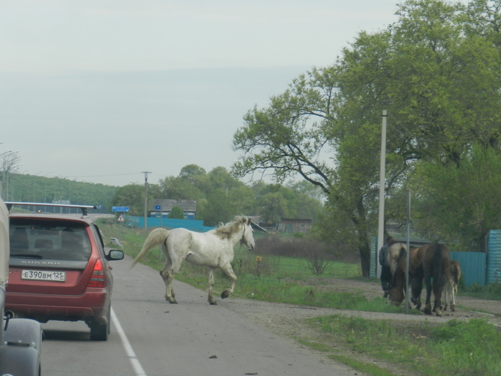 Horses encountered during the drive to the border