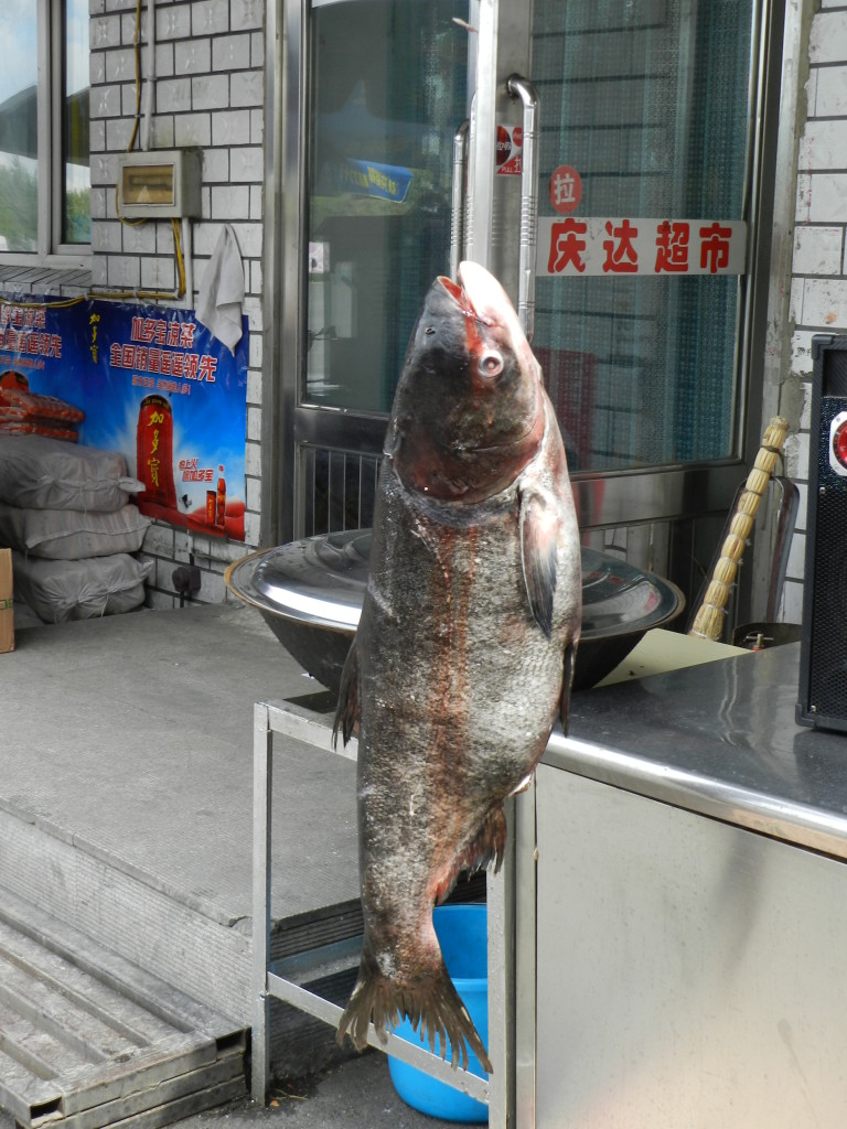 Fish hanging out at a gas station
