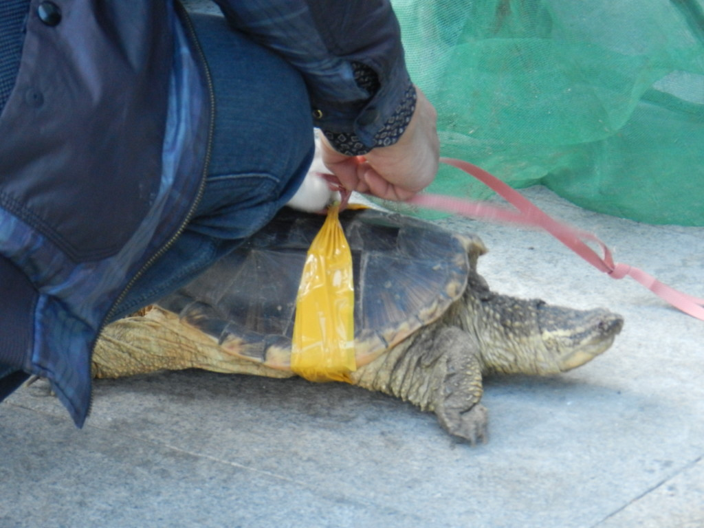 Turtle in Qiqihar