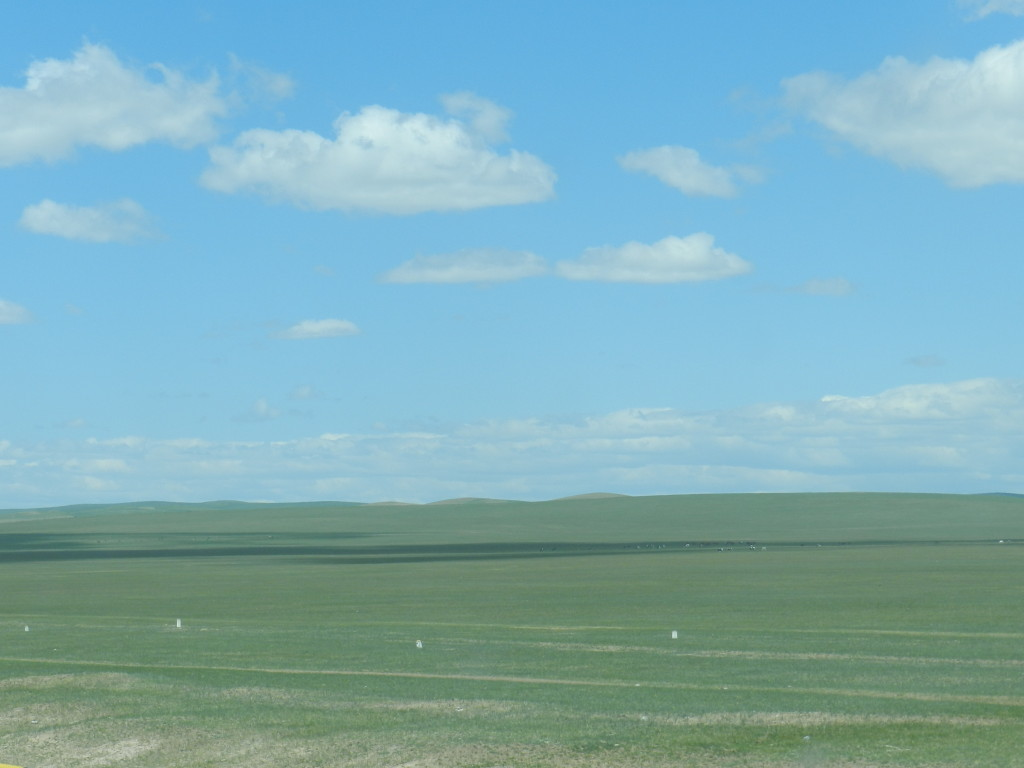 Typical steppe scene