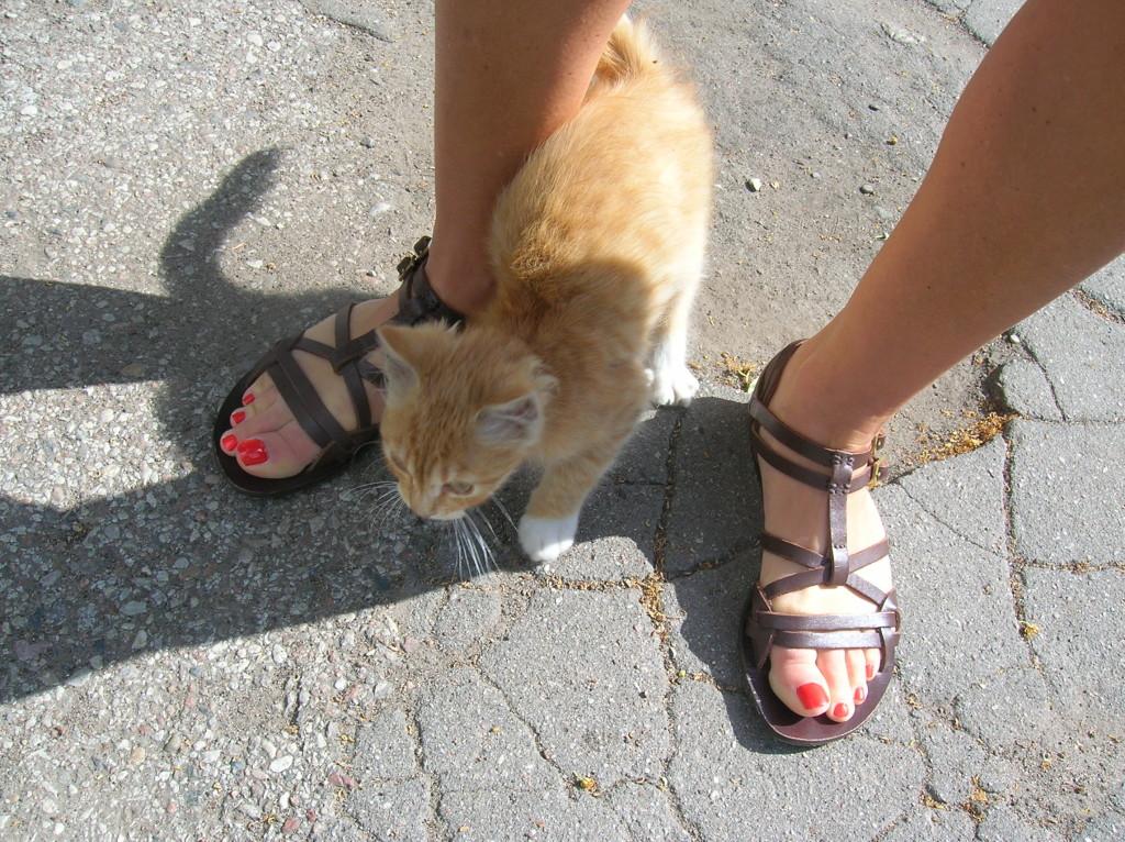 Kaliningrad kitten