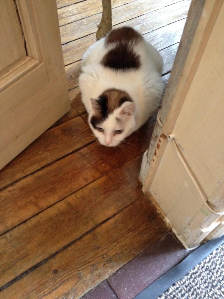 Calico cat at Le Petit Chapitre
