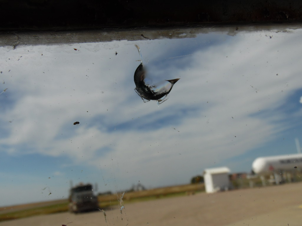 Rock chip in windshield....thanks gravel truck driver!!